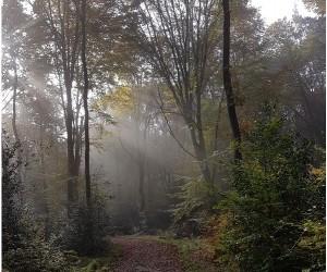 nebel_lowres