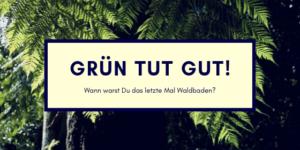 Achtung Wochenende: Waldbaden